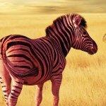 Pinkzebra feat. Benji Jackson — Larger Than Life