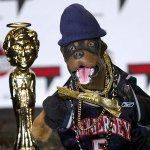 Triumph The Insult Comic Dog — I Keed